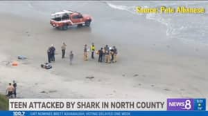 Teen Attacked By Shark While Diving For Lobsters