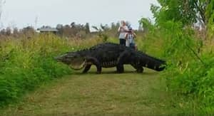 Is That A Giant Alligator Or A Freaking Dinosaur?
