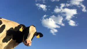 Milk, Glorious Milk! Drogheda Farm Launches Ireland's First Fresh Milk Vending Machine