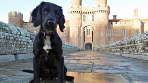 Spaniel Puppy Found Dumped In A Bucket Becomes Police Sniffer Dog