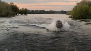 Angry Hippo Chases Sightseers Through Water For 200 Metres