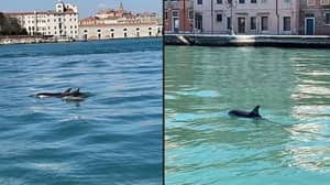 Dolphins Spotted Swimming Up Venice Canal In 'Exceptionally Rare' Sighting