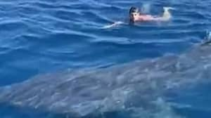 Swimmer Comes Face To Face With 20ft Basking Shark