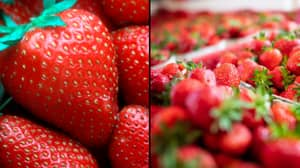 Young Boy Arrested For Putting Needles Into Strawberries In Australia