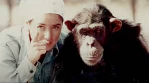 Woman Who Raised Chimp As Human On Coffee And Gin Says She Regrets It