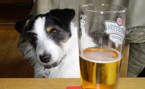 Here's Where The Phrase 'Hair Of The Dog' Comes From