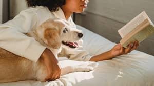 Women Sleep Better Next To Dogs Than Men According To Study
