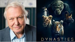 Sir David Attenborough's Next Must-See BBC Documentary To Air In Autumn
