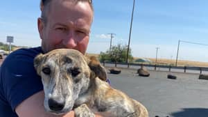 Taliban Blocks Ex-Marine Who Is Rescuing 173 Cats And Dogs From Afghanistan