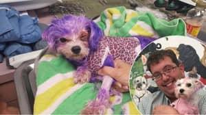 Animal Cruelty: Poor Dog Nearly Dies After Her Owner Dies Her Purple
