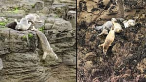 Terrified Seals Are Throwing Themselves Off Cliffs To Flee Intrusive Tourists In Cornwall