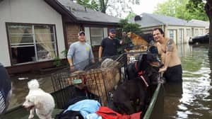 Rescuers Save More Than 20 Dogs From Flood Waters In Houston