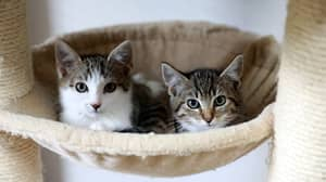 Study Finds Slow Blinking Is Key To Befriending Cats