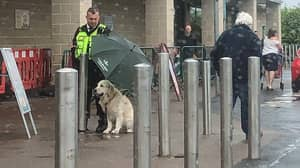 Morrisons Security Guard Praised For Sheltering Dog Under Umbrella In The Rain