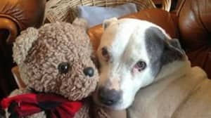 Animal Lover Runs The UK's First Dog Hospice For Pets Who Have Less Than Six Months To Live