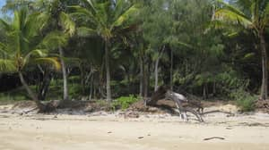 The Locals Of This Paradise Island Will Kill You If You Get Too Close