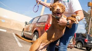 Dog Who Spent More Than 400 Days At Animal Shelter Finally Finds Loving Home