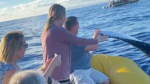 Amazing Moment Man Gives Massive Whale A High-Five