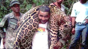 Dentist Arrested After 'Illegally Killing 1,000 Protected Jaguars'