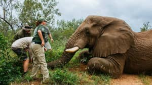 Charity Steps In To Re-Locate Elephant At Risk Of Being Legally Killed