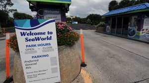 TripAdvisor To Stop Selling Tickets And Packages To SeaWorld And Other Companies