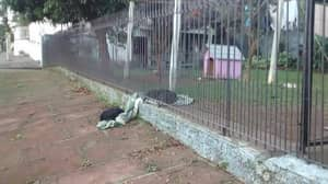 Rescued Dog Drags Blanket Outside So Homeless Dog Could Sleep On It