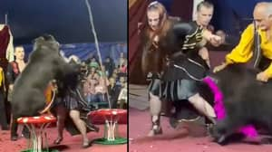 Performing Bear Dressed In Hat And Scarf Goes Wild In Circus And Attacks Trainer