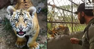 Aldo Kane Uncovers Illegal Tiger Farms Where Their Bones Are Being Sold For More Than Cocaine