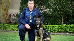 Queensland Police Devastated After K-9 Dies While Tracking Man Involved In A Break In