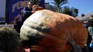 A 2,350 Pound Pumpkin Named Tiger King Wins The 'Super Bowl of Pumpkins'