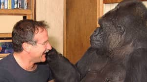 Robin Williams Said Meeting Koko The Gorilla Was An 'Unforgettable' Experience