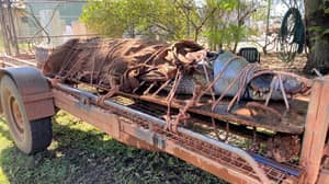 Wildlife Rangers Capture Huge 350kg Crocodile The Size Of A Car