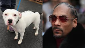 Snoop Dogg Offers Home To Abandoned Staffie Dog Called Snoop
