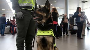 Criminal Gang 'Takes Out Contract' On Police Sniffer Dog