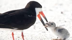 Bird Spotted Feeding Chick Cigarette Butt In 'Tragic' Photograph