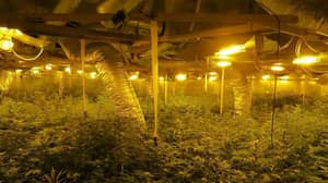 'Indiana Jones-like' Drugs Den Is Britain's Most Sophisticated Cannabis Farm
