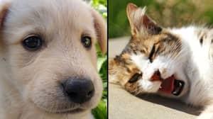 Millennials Treat Pets Like Their 'First Born Baby'