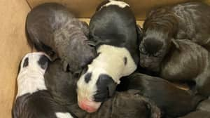 New Zealand Authorities Shocked After Finding Abandoned Box Filled With Puppies