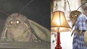 Hundreds Of Moth Memes Have Flooded The Internet And There's A Hilarious Reason Why