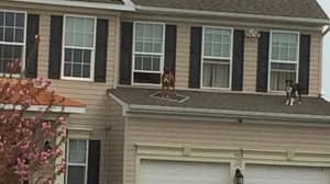 Some Dogs Had A Party On A Roof And It Went Viral - Obviously