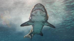 Australia Renames Shark Attacks 'Negative Encounters' To Banish 'Man-Eating Monster' Perception