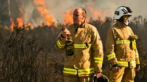 Wildfires Have Destroyed Part Of Winnie The Pooh's Hundred Acre Wood
