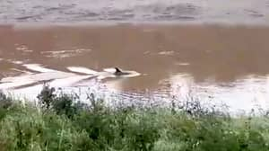 Dolphin Spotted In River In Cambridgeshire