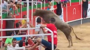 Bull Leaps Into Crowd At Spanish Event Before Being Shot Dead
