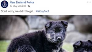 New Zealand Police Told To Stop Spending Over $100,000 Posting Dog Pictures On Social Media