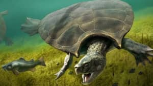 Researchers Find 13-Million-Year-Old Turtle Fossil The Size Of A Car