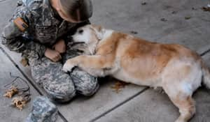 Elderly Dog Can't Contain Her Emotions As Soldier Owner Comes Home
