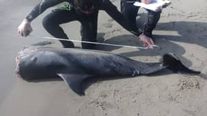 Decapitated Dolphins Found On Beach In Spain