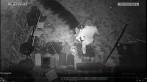Burglar Identified On CCTV Because He Has One Leg