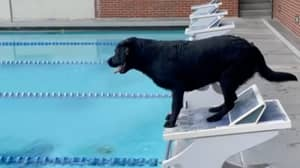 Gold Medallist Trained His Dog To Race Like An Olympic Swimmer